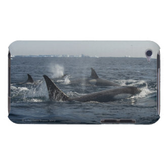 killer whale barely there iPod covers