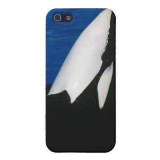 Killer Whale iPhone 5 Case