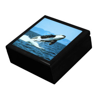 Killer Whale Large Square Gift Box