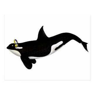 Killer Whale Listening To music Yellow Headphones Postcard