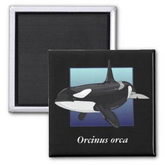 Killer Whale Magnet, Square Square Magnet