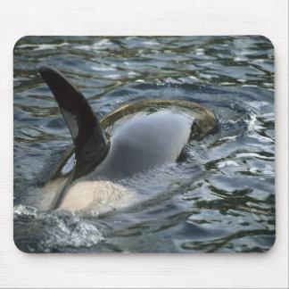 Killer Whale, Orca, Orcinus orca), adult Mouse Mat