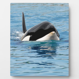 Killer whale swimming display plaques