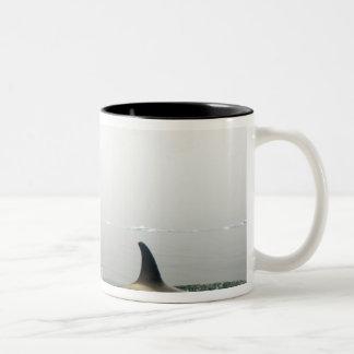 killer whales (orcas), Orcinus orca, pod 2 Two-Tone Coffee Mug