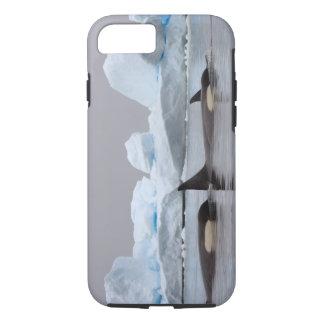 killer whales (orcas), Orcinus orca, pod iPhone 8/7 Case