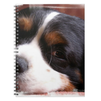 King Charles Cavalier  Notebook