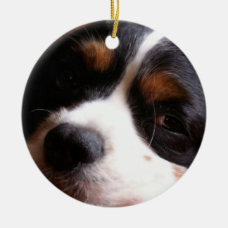 King Charles Cavalier Spaniel Ornament