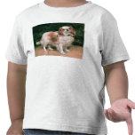 King Charles Spaniel, 1907 Tee Shirt