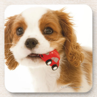 King Charles Spaniel with red car in her mouth. Coaster