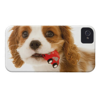 King Charles Spaniel with red car in her mouth. iPhone 4 Case