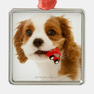King Charles Spaniel with red car in her mouth. Silver-Colored Square Decoration