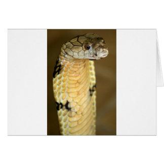 king cobra card