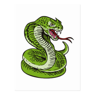 king cobra snake angry attacking postcard