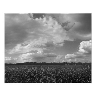 King Cotton Landscape Black White Poster Print