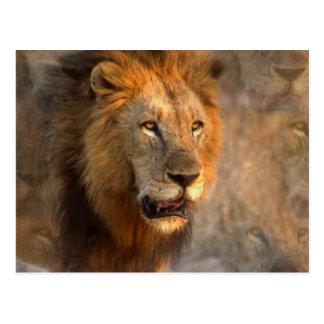 King of Jungle Postcard