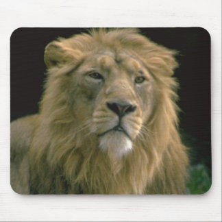 King of the Jungle Lion Image on customizabe items Mouse Pads