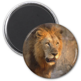 King of the Jungle Magnet