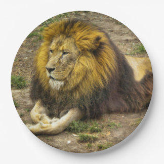 King of the Zoo Paper Plate 9 Inch Paper Plate
