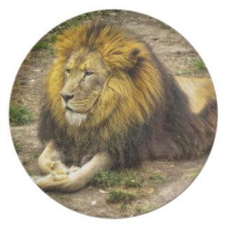 King of the Zoo Plate