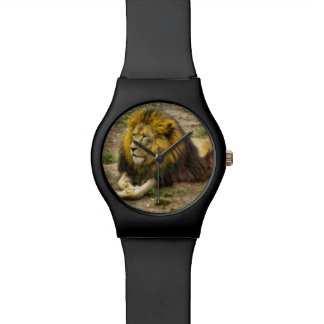 King of the Zoo Watch