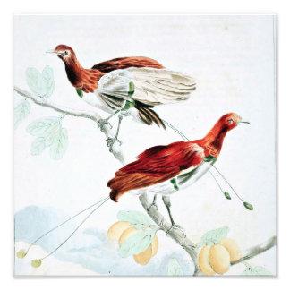 King Paradise Bird Photo Art