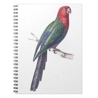King Parakeet Spiral Notebook