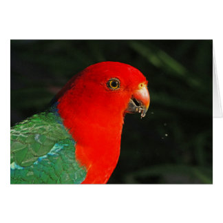 King Parrot Greeting Card