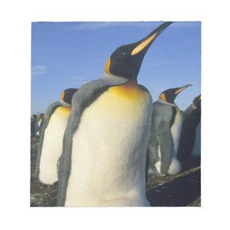 King Penguin, (Aptenodytes patagonicus), 2 Notepad