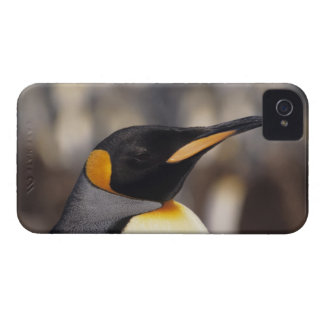 King penguin (Aptenodytes patagonicus) iPhone 4 Case-Mate Case