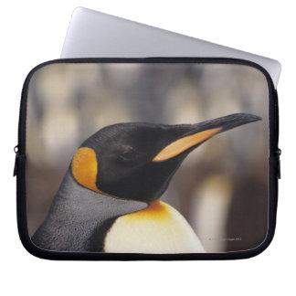 King penguin (Aptenodytes patagonicus) Laptop Sleeve