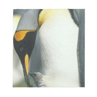 King Penguin, (Aptenodytes patagonicus), Notepad