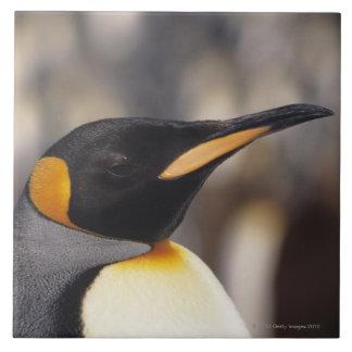 King penguin (Aptenodytes patagonicus) Tile
