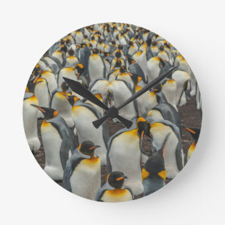 King penguin colony, Falklands Round Clock