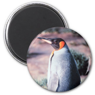 King Penguin on Heard Island 6 Cm Round Magnet