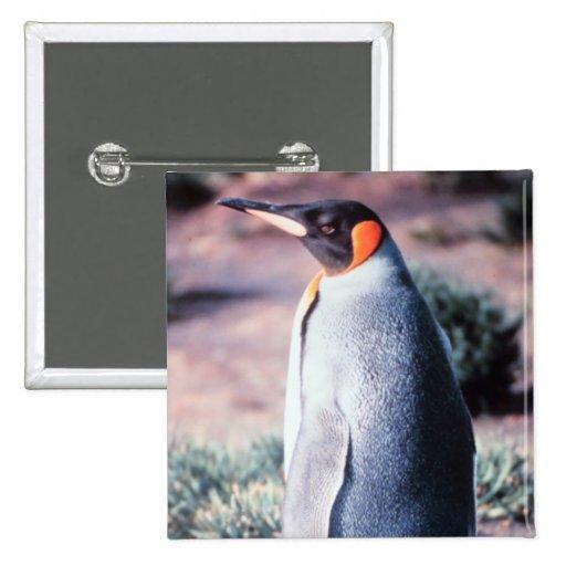 King Penguin on Heard Island Pinback Button