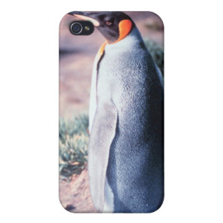 King Penguin on Heard Island Covers For iPhone 4