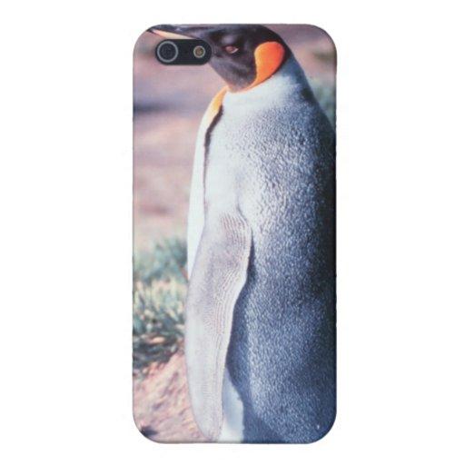 King Penguin on Heard Island iPhone 5 Covers