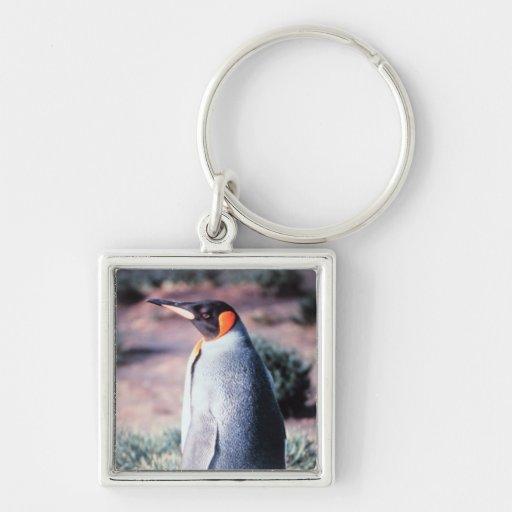 King Penguin on Heard Island Key Chains