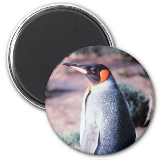 King Penguin on Heard Island Fridge Magnet