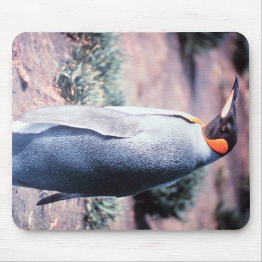 King Penguin on Heard Island Mousepad
