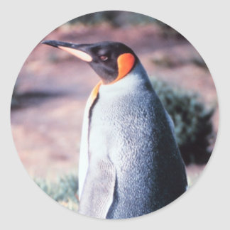 King Penguin on Heard Island Round Sticker