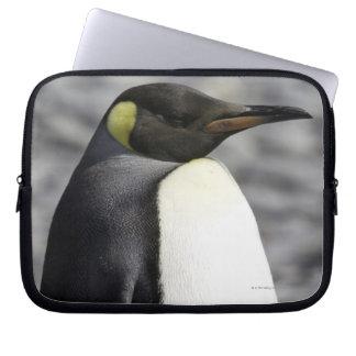 King Penguin, Salisbury Plain, South Georgia Laptop Sleeve