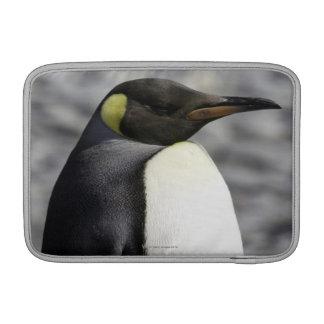 King Penguin, Salisbury Plain, South Georgia MacBook Sleeve