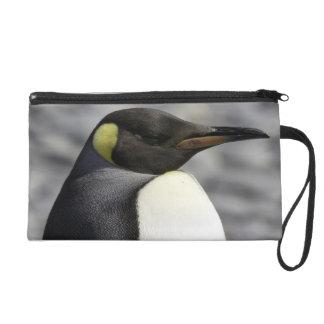King Penguin, Salisbury Plain, South Georgia Wristlet