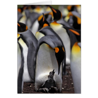 King penguin with chick card