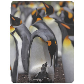 King penguin with chick iPad cover