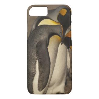 King Penguins (Aptenodytes p. patagonica) iPhone 8/7 Case