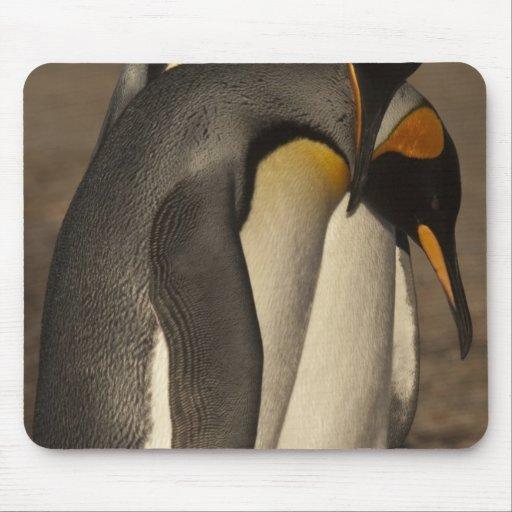 King Penguins (Aptenodytes p. patagonica) Mouse Pads