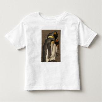 King Penguins (Aptenodytes p. patagonica) Shirt