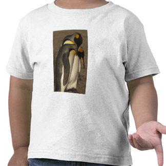 King Penguins Aptenodytes p patagonica Tee Shirt